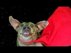 really spaced dog funny unexpected ending