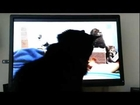 Nero and the Washington Animal Rescue League Kitten Cam