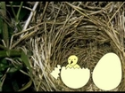 Kee Ko Koo Egg Small Bird Eat to Mother Malayalam Animation